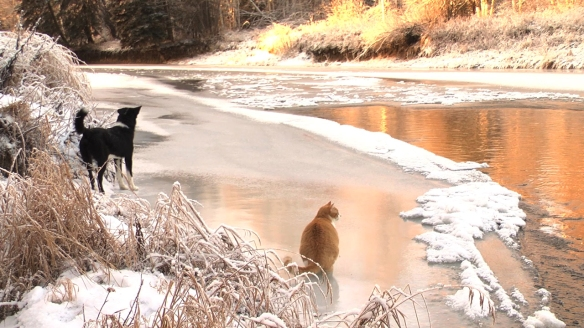 ATT_dog_cat_on_ice