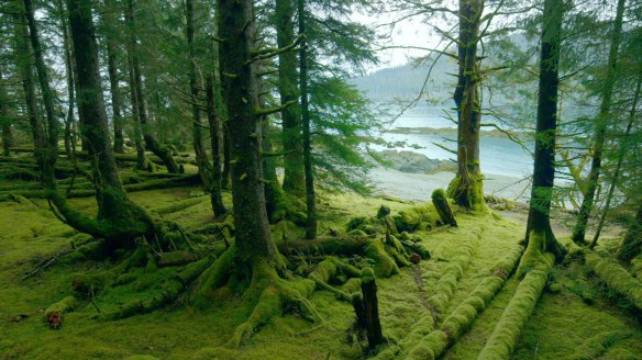 Tanu, Haida Gwaii - Abandoned Village, Gwaii Haanas National Park Reserve